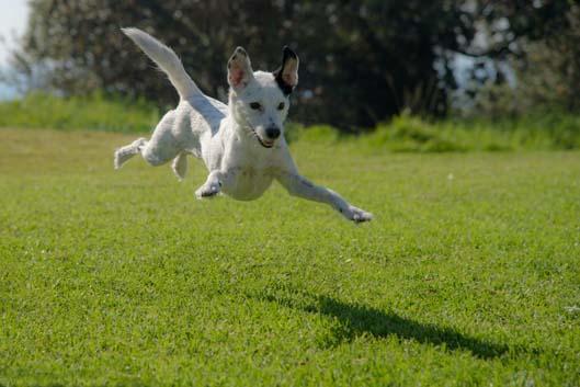 Sve o psima - Animalkingdom
