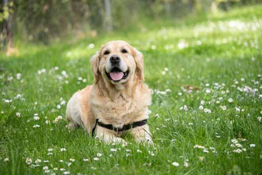 Animalkingdom - sve o psima